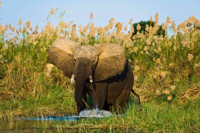 Simbabwe Rundreise -Elefant - Hwange National Park - Simbabwe