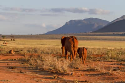 Tansania Safari -Elefanten - Ngorongoro Krater - Tansania