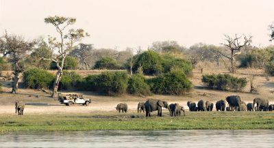 Rundreise durchs Südliche Afrika - Namibia Suedafrika Botswana Rundreise - Elefantenherde - Okavango Fluss - Botswana