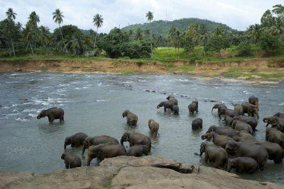 Elefanten im Fluss - Sri Lanka