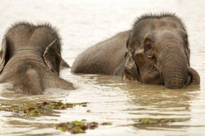 Thailand Individualreise - Laos Kambodscha Gruppenreise -Kambodscha Laos Vietnam Rundreise -Elefanten im Wasser - Laos