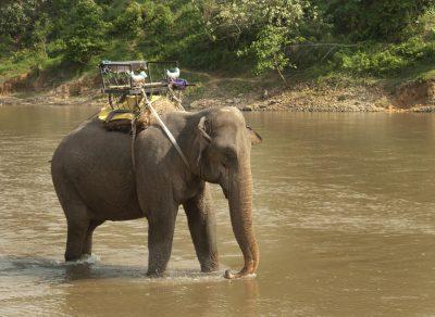 Individuelle Laos Reise -Laos Vietnam Gruppenreise -Elefant im Fluss - Elefantenreiten - Laos