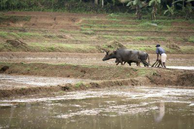 Sri Lanka Rundreise -Farmarbeit - Sri Lanka