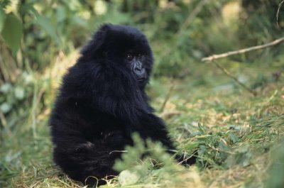 Uganda Gruppenreise -Rundreise Uganda -Gorilla - Parc National des Vulcans - Ruanda