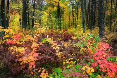 Herbst - Mala Fatra - Slowakei