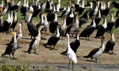 Uganda Gruppenreise - Kazinga Kanal - Queen Elizabeth National Park - Uganda