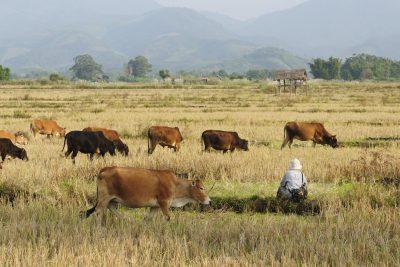 Laos Reise -Landleben - Laos