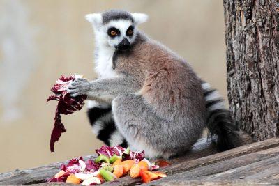 Gruppenreise Madagaskar -Lemur - Wildschutzreservat - Madagaskar