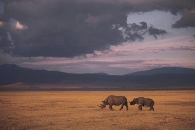 Tansania Safari -Nashoerner - Ngorongoro Krater - Tansania