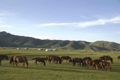 Mongolei Rundreise -Mongolei Reiturlaub - Mongolei Individualreise -Mongolei Gruppenreise -Pferde - Jurtencamp
