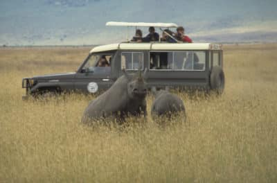 Pirschfahrt - Serengeti National Park - Tansania