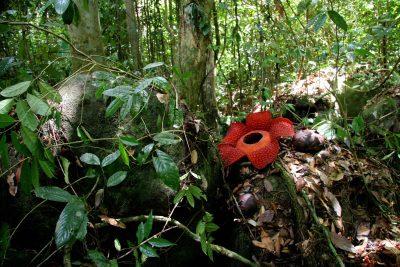 Gruppenreise Borneo -Rafflesia - Bako Nationalpark - Borneo Malaysia