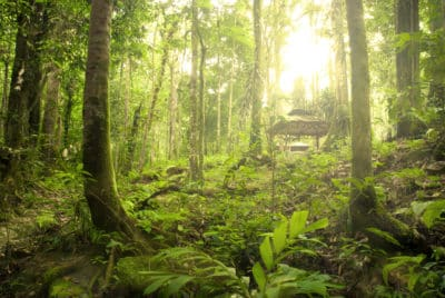Malaysia Rundreisen Borneo -Borneo Rundreise -Regenwald - Borneo - Malaysia