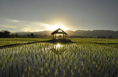 Kambodscha Laos Rundreise -Laos Individuelle Rundreise -Laos Vietnam Gruppenreise -Reisfeld im Sonnenuntergang - Laos
