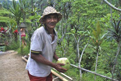 Reisplantage - Bali - Indonesien