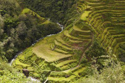 Philippinen Gruppenreise -Reisterrasse - Banaue - Philippinen