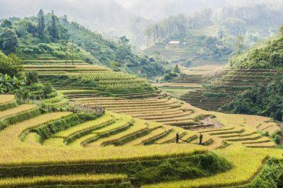 Indonesien Gruppenreise -Reisterrassen - Flores - Indonesien