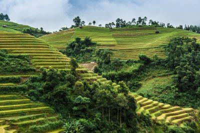 Vietnam individuell -Vietnam Gruppenreise -Reisterrassen