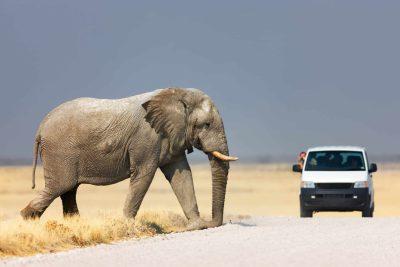Namibia Abenteuerreise - Rundreise durchs Südliche Afrika - Safari Pirschfahrt - Etosha Park