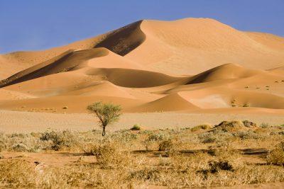 Sandduene - Namib Wueste - Namibia