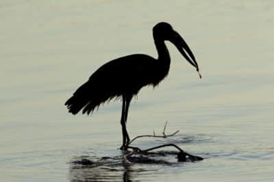 Storch - iSimangaliso-Wetland-Park - Suedafrika