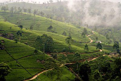 Sri Lanka Rundreise -Teeplantage - Hochland - Sri Lanka