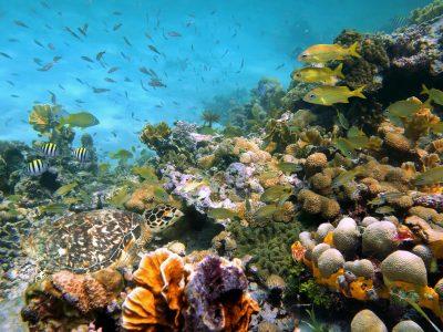 Indien Rundreise -Unterwasserwelt - Schnorcheln - Andamanen - Indien