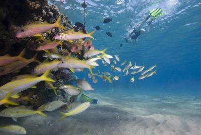 Vietnam Individuell -Unterwasserwelt - Vietnam
