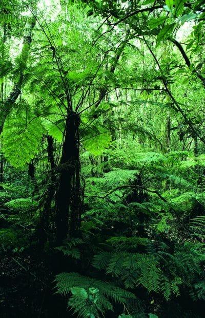 Suedafrika individuell - Urwald - Tsitsikamma National Park - Suedafrika