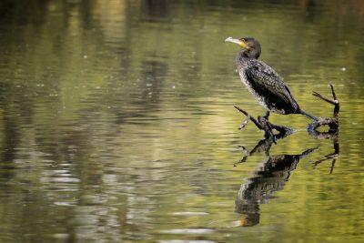 Radreise Indien -Vogel - Keoladeo Nationalpark - Indien