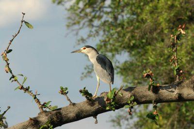 Namibia Abenteuerreise - Namibia Botswana Rundreise - Vogel im Baum - Bwabwata NP Caprivi - Namibia