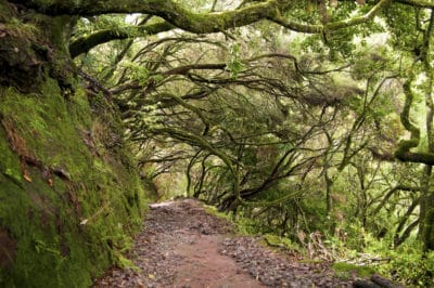 Wald - Madeira - Portugal