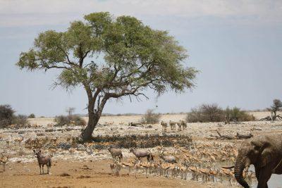 Namibia Abenteuerreise - Namibia Selbstfahrerreise - Wasserloch Okaukuejo - Etosha National Park - Namibia