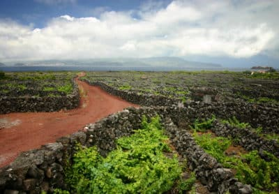 Wein - Insel Pico - Azoren - Portugal