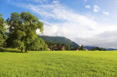 Wiese - Mieminger Sonnenplateau - Oesterreich