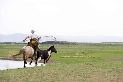 Mongolei Rundreise -Reiturlaub Mongolei - Mongolei Gruppenreise -Wildpferde - Mongolei