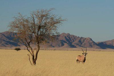 Namibia Safari -Wuestenlandschaft