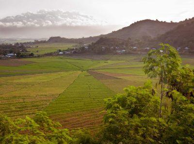 spinnenartige Reisefelder - Insel Flores - Indonesien