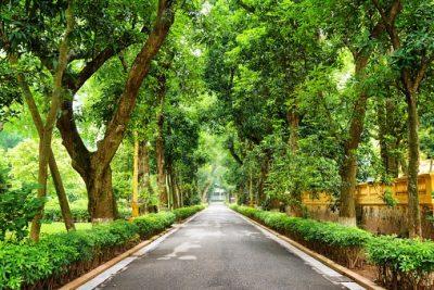 Vietnam Rundreise - Strasse durch den Botanischen Garten - Hanoi