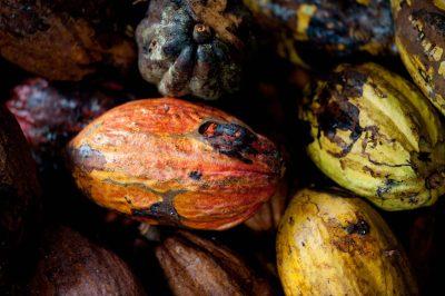 Sao Tome und Principe Rundreise -Aktivurlaub auf Sao Tome und Principe -Kakaobohnen - Sao Tome e Principe