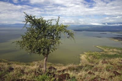 Chamo See - Nechisar National Park - Äthiopien
