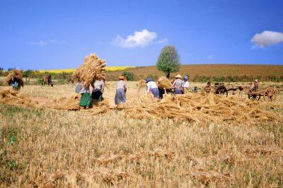 Myanmar Gruppenreise -Myanmar Erlebnisreise -Farmarbeit - Mandalay - Myanmar