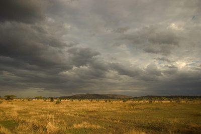 Gewitterwetter - Serengeti Nationa Park - Tansania