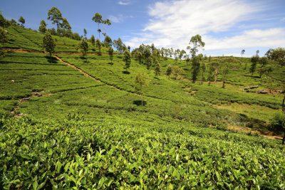 Sri Lanka Rundreise -Teeanbau - Hochland - Sri Lanka