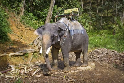 Thailand Studienreise -Elefant - Khao Sok National Park - Thailand