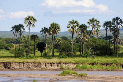 Landschaft -TarangireNational Park - Tansania