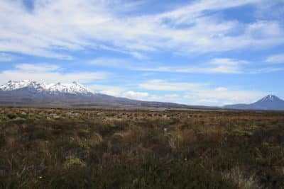 Tongariro National Park - Nordinsel - Neuseeland