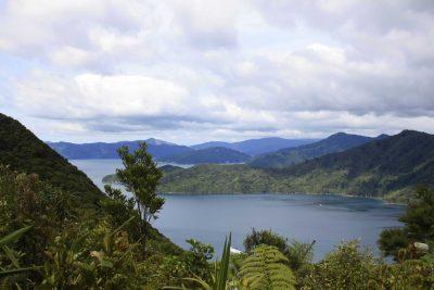 Farn - Queen Charlotte Track - Neuseeland