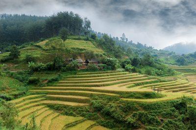 Reisfelder in den Bergen - Nord-Vietnam