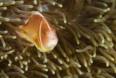 Fisch -Unterwasser - Philippinen